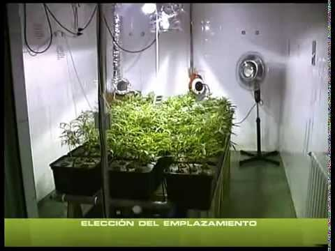 COME COLTIVARE INDOOR ¦ TUTORIAL ITALIANO ¦ 1 PARTE ¦ KUSHWEED (видео)