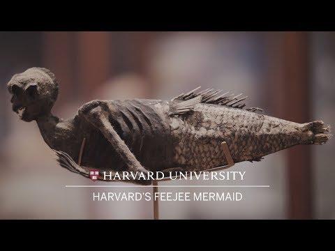 Harvard's FeeJee mermaid