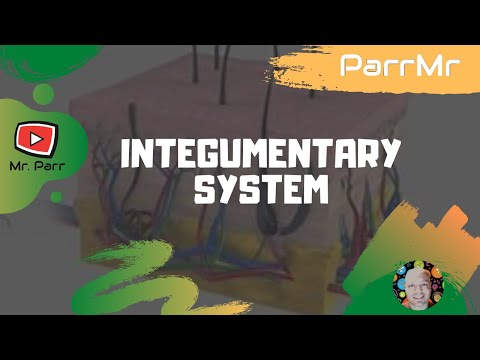 Integumentary System Song