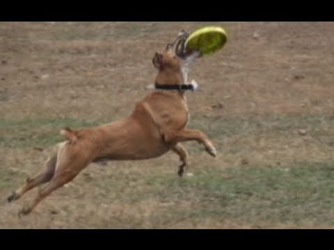FUNNY DOGS PLAYING FETCH