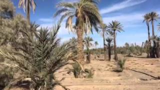 Skoura Morocco  city pictures gallery : Date Palms and Olive Groves Skoura Morocco