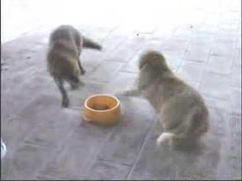 il gatto e la volpe!