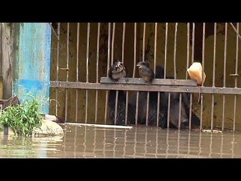 Ρωσία: Επιχείρηση διάσωσης άγριων ζώων από αέρος