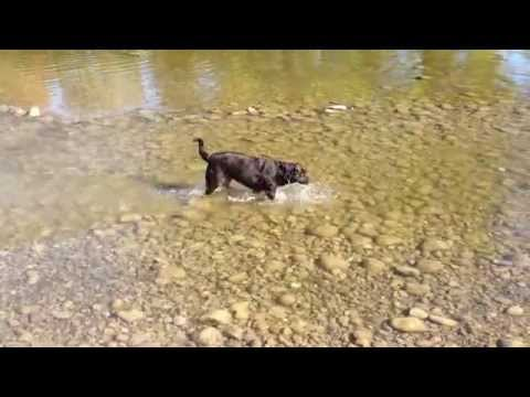 Clever Dog – The Easy Way Of Drinking