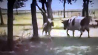 Video Carnero contra la vaca: análisis. MP3, 3GP, MP4, WEBM, AVI, FLV November 2017