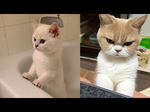 Funny cat videos - Funny Cat and Cute Kittens Videos Compilation #5
