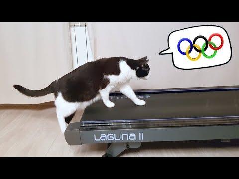 Why am I not at the Olympics? (видео)