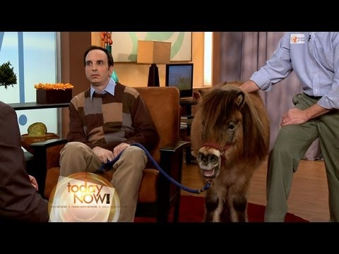 Miniature Horses Replace Family