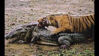 Video Top 10 Craziest Animal Fights Caught On Camera Part 2 MP3, 3GP, MP4, WEBM, AVI, FLV April 2019