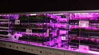 【5坪で300坪の植物が栽培できる!?】LEDを使った都市型菜園システムが凄い