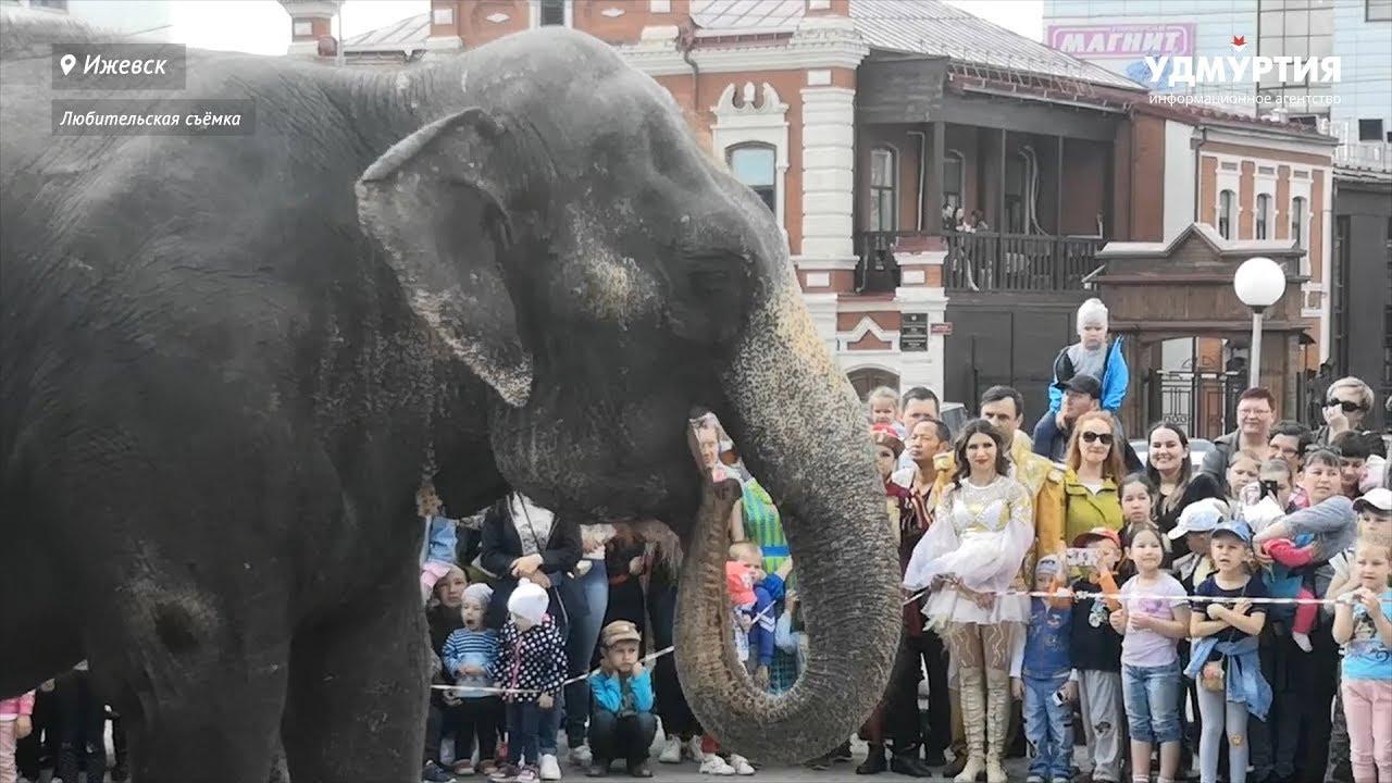 По улицам Ижевска слонов водили
