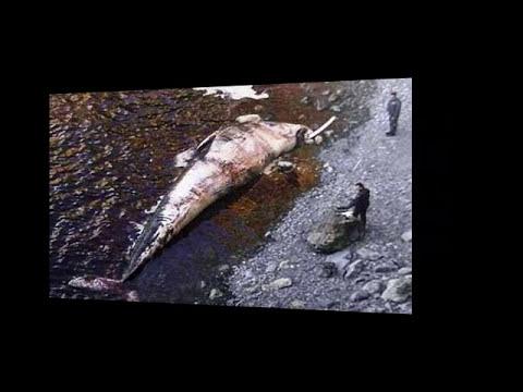 TERREMOTO TSUNAMI JAPON 11-3-2011 SECRETO HALLARON MONSTRUOS HORRIBLES