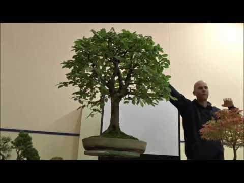 Peter Warren Tree Critique - Deciduous Trees