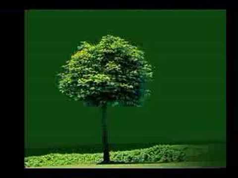Tekst piosenki Patrick Fiori - Bleu Et Vert po polsku