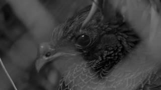Comercial – Cuidado de fauna silvestre – Tu casa será su cárcel 1