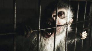 Nonton REC 4 Apocalypse Bande Annonce (2014) Film Subtitle Indonesia Streaming Movie Download