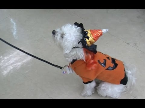 Pet lovers dress up dogs for Halloween