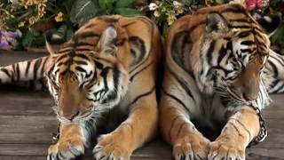 Video 10 Abnormally Large Animals That Actually Exist MP3, 3GP, MP4, WEBM, AVI, FLV April 2019