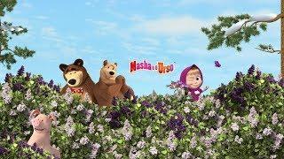 Download Video Masha e o Urso - Todas os episódios 🎬 Desenho animado novo 2019! MP3 3GP MP4