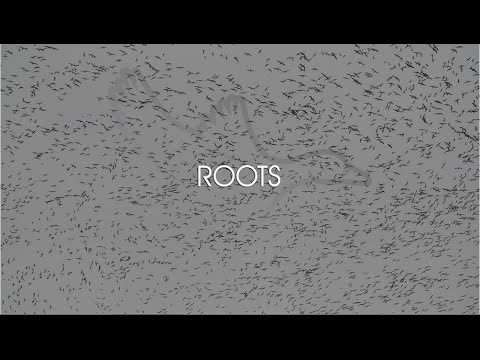 """HW 3.8 """"Roots"""""""