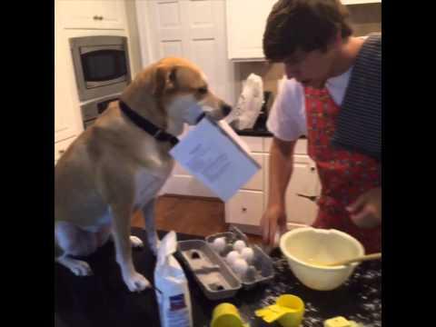 他用短短的15秒影片證明單身真的沒關係,只要有一隻狗在身邊就夠了!