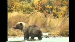 Video Jim & Jim Fly Fishing Brooks River Katmai National Park Alaska MP3, 3GP, MP4, WEBM, AVI, FLV Oktober 2017