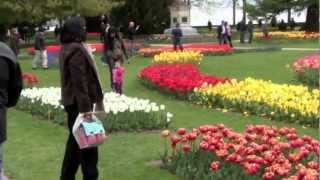 Morges Switzerland  city pictures gallery : tulip-festival: MORGES SWITZERLAND: par tvs