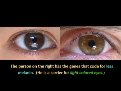 Genetics and Eye Color