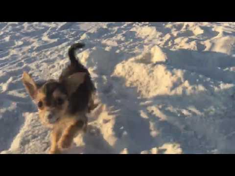 Jax love playing on the beach