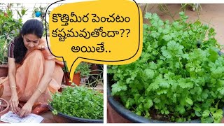 Video How to grow  coriander (cilantro) successfully??కొత్తిమీరను సులువుగా పెంచడం ఎలా?#leafy vegetables MP3, 3GP, MP4, WEBM, AVI, FLV Maret 2019