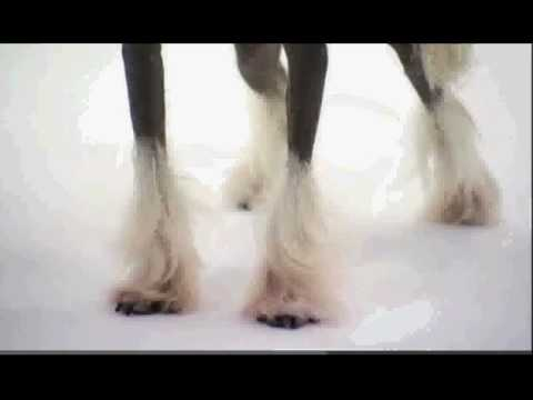 Dogs 101: Chinese Crested (видео)