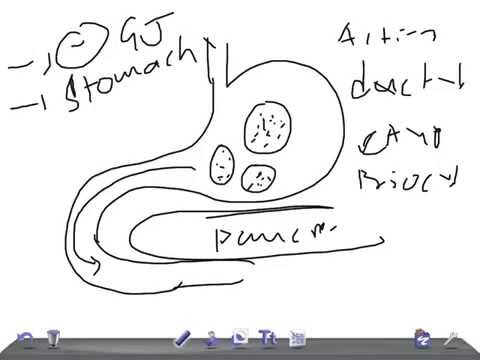Medical Video Lecture, PHYSIOLOGY: SECRETIN