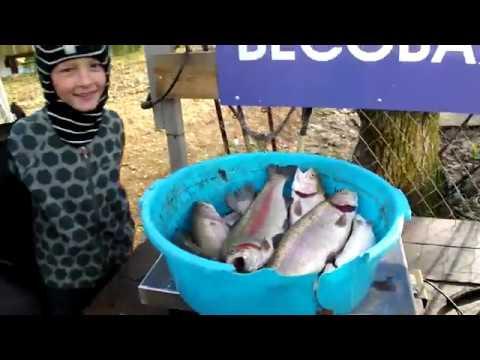 Форелевая рыбалка за 4 ноября 2018