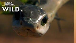 World Snake Day is Sssomething Ssspecial   Nat Geo WILD by Nat Geo WILD