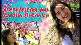 Oi gente! Neste vídeo mostro para vocês as cerejeiras do Jardim Botânico daqui de Curitiba! No fim deste mês geralmente é a...