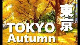 【東京】秋の深まりを感じる、いちょう並木が美しい