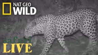 Safari Live - Day 167 | Nat Geo Wild by Nat Geo WILD