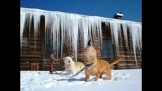 Wakkanai Japan  city images : Wakkanai: winter in the northernmost city in Japan  最北の街稚内の冬景色(2012)