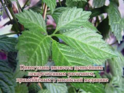 youtube/MlW-yUO5kFA
