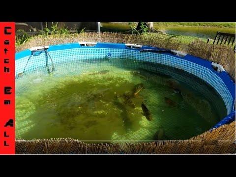 Best raww fishing videos aquatic videos - Swimming pool to fish pond conversion ...