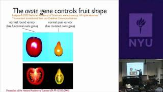 Natural Science II: Genomes And Diversity - Agricultural Traits: Rice, Tomatoes, Corn