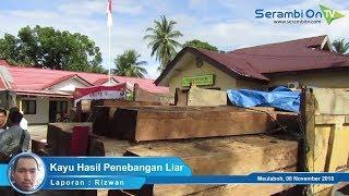 Tiga Warga Aceh Barat Jadi Tersangka Kayu Hasil Penebangan Liar
