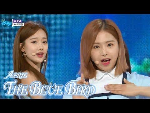 [HOT] APRIL - The Blue Bird, 에이프릴 - 파랑새 Show Music core 20180331 (видео)