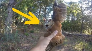 An Owl Found Squirming In A Ditch Left Experts Scratching Their Heads by Did You Know Animals?