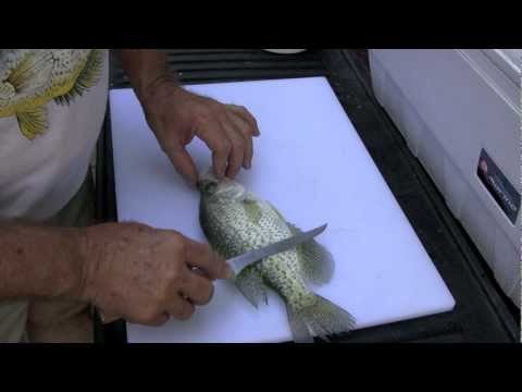 Cleaning a Crappie the traditional way with Browning fillet knife