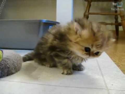 il gatto più tenero del mondo!