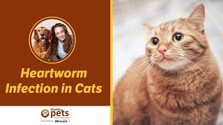 Heartworm Infection in Cats