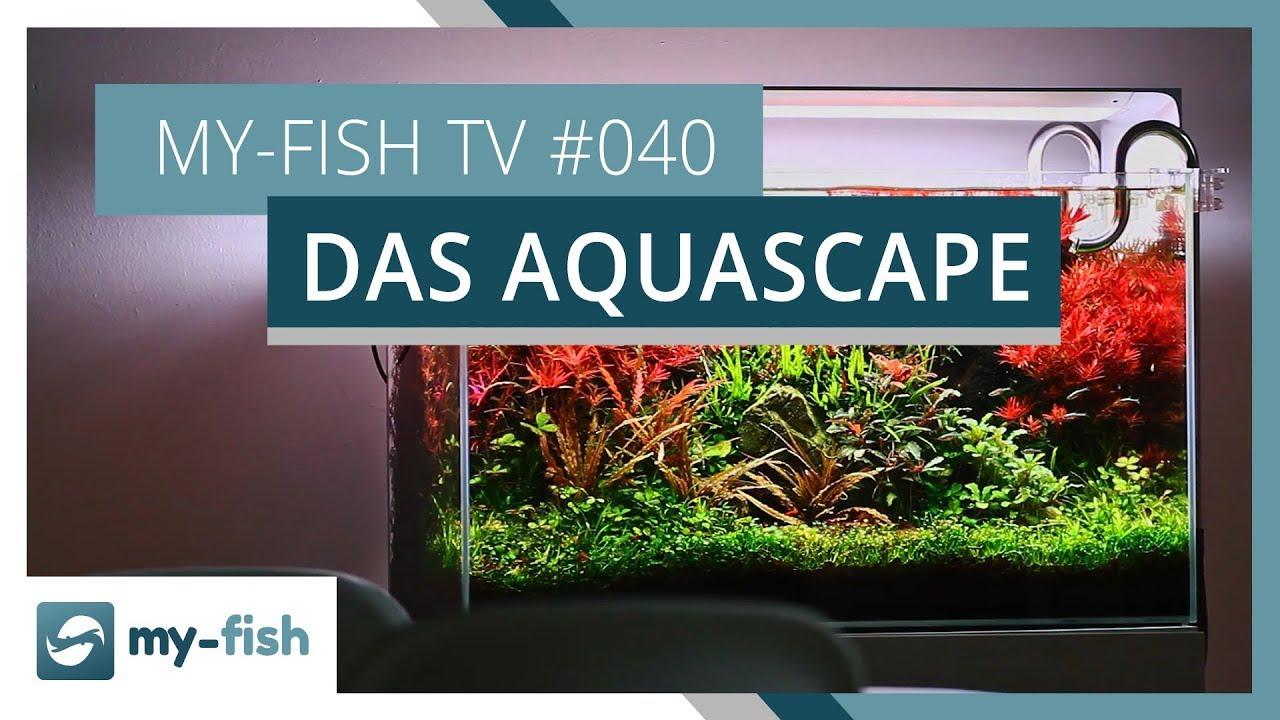 my-fish TV - Deine Nr. 1 Anlaufstelle für alle Themen rund um die Aquaristik 24