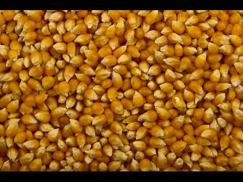 ферментация пшеницы для того ловли карпа