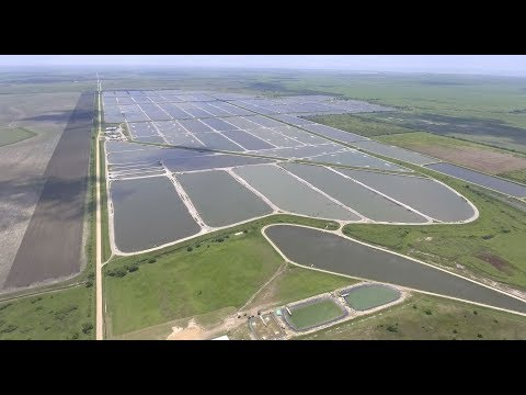 Bower's Shrimp Farm | Part 1 – This is Reed Bowers!